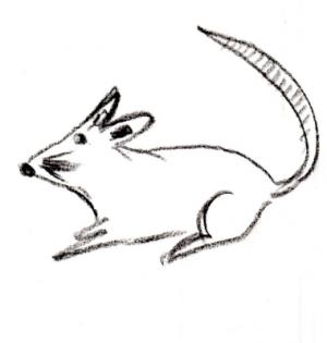 rata - ratón